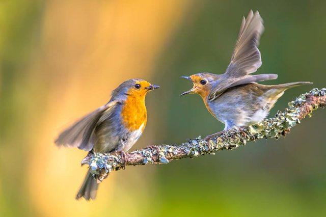 Herrliche Vögel im Garten