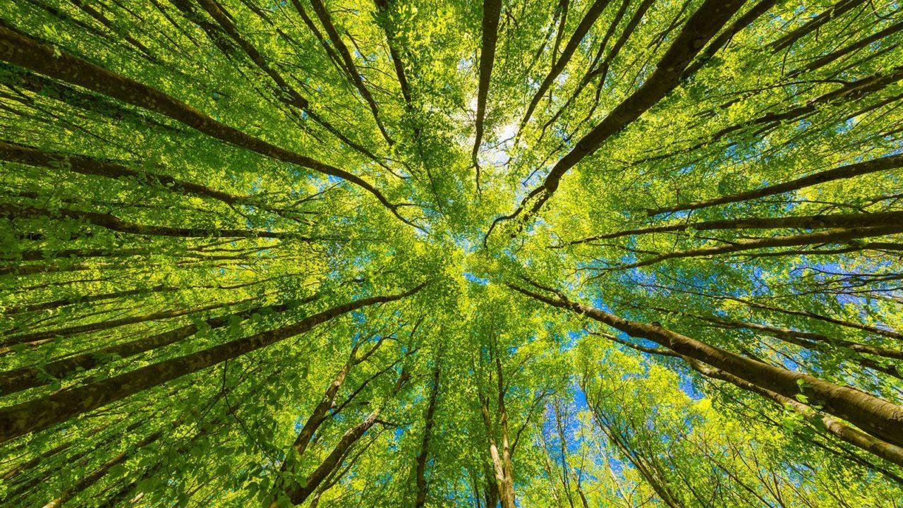 Den Blick nach oben lenken, Dankbarkeit, Mitgefühl, Vertrauen