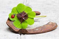 Hufeisen, vierblättriges Kleeblatt und Marienkäfer auf Holz