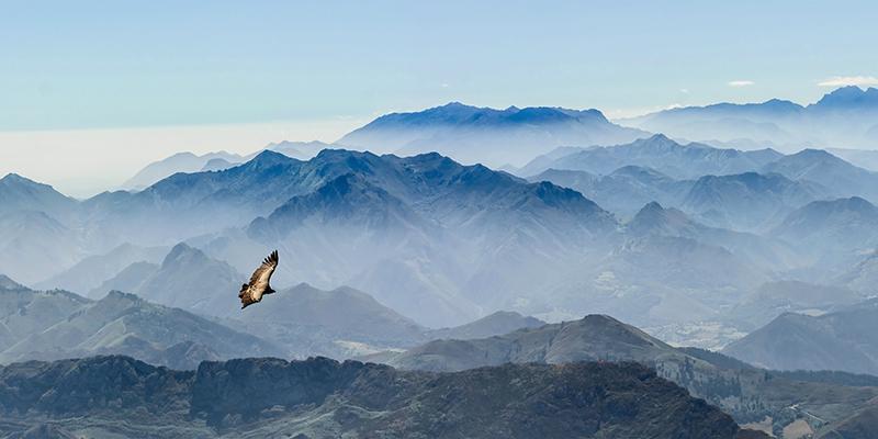gleitender Geier in den Gipfeln der Picos de Europa in Asturien